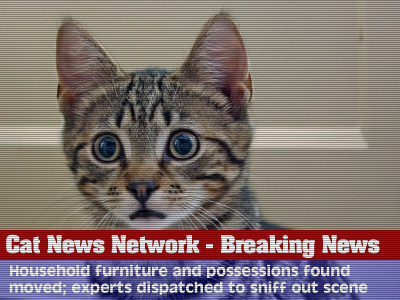 Cat News Network