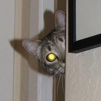 cat-thumb