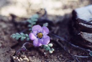 purple_monkey