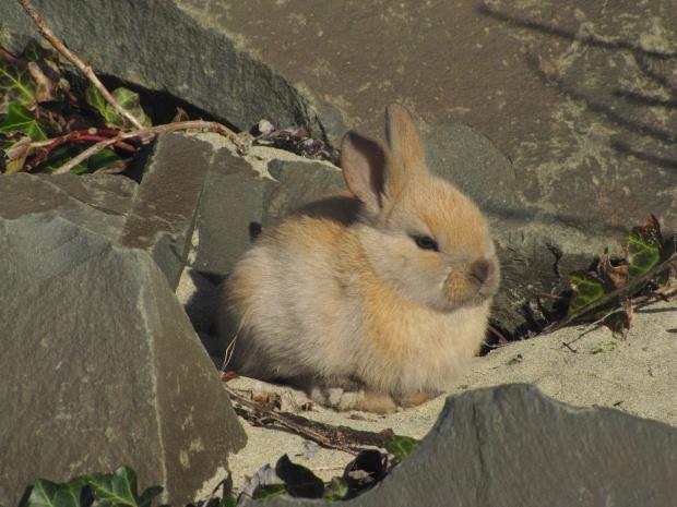 beach-bunny