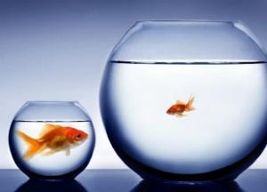 bigfishsmallpond