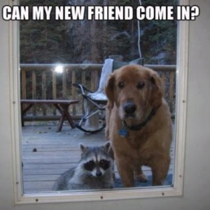 new-friend