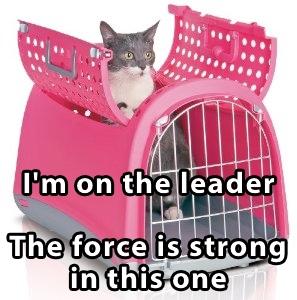 cat-carrier