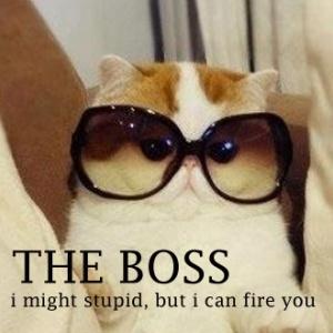 boss-cat